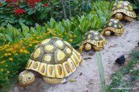 Kaplumbağa Süslü Bahçe Dekorasyonu