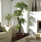 Bitkilerle Salon Dekorasyonu